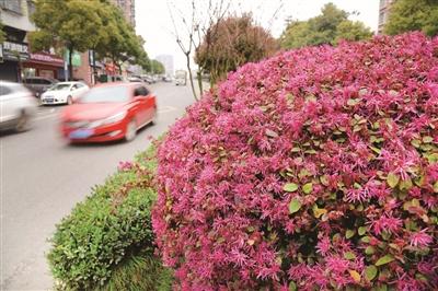 950轮播图片素材鲜花